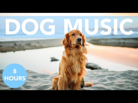 8 HOURS of Relaxing Music for Dogs! Music for Dogs to Sleep! Helped 12 Million Dogs!