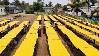 Biggest Mango Jelly Making Process - Aam Papdi Making - Mamidi Tandra - How its Made Mango Jelly