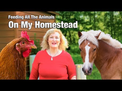Watch me feed all the funny animals on my small homestead.