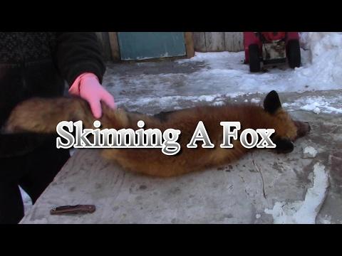 Skinning a Fox