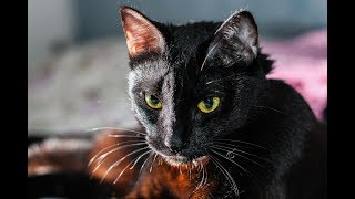 Black Cats   Funny Cats   Cat Meowing video