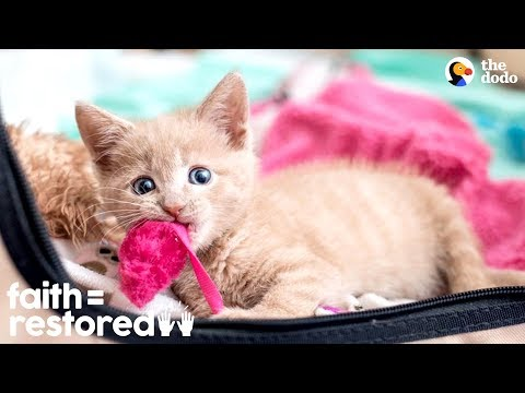 Woman Rescues Paralyzed Kittens And Finds Them Homes   The Dodo Faith = Restored