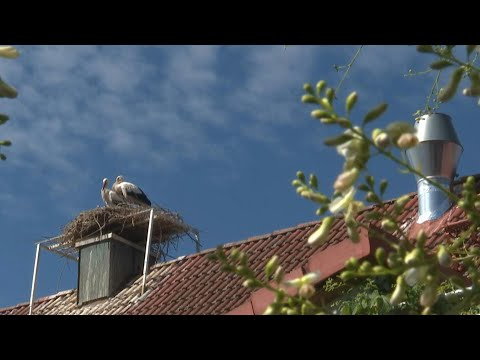 Storks force a Bavarian brewer to stop his productio | AFP photo