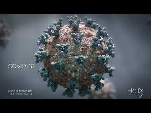 3D Animation: SARS-CoV-2 virus transmission leading to COVID-19