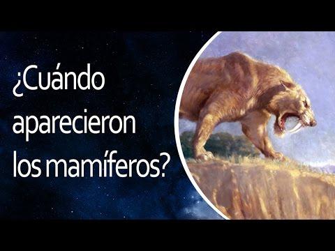 ¿Cuándo aparecieron los mamíferos?