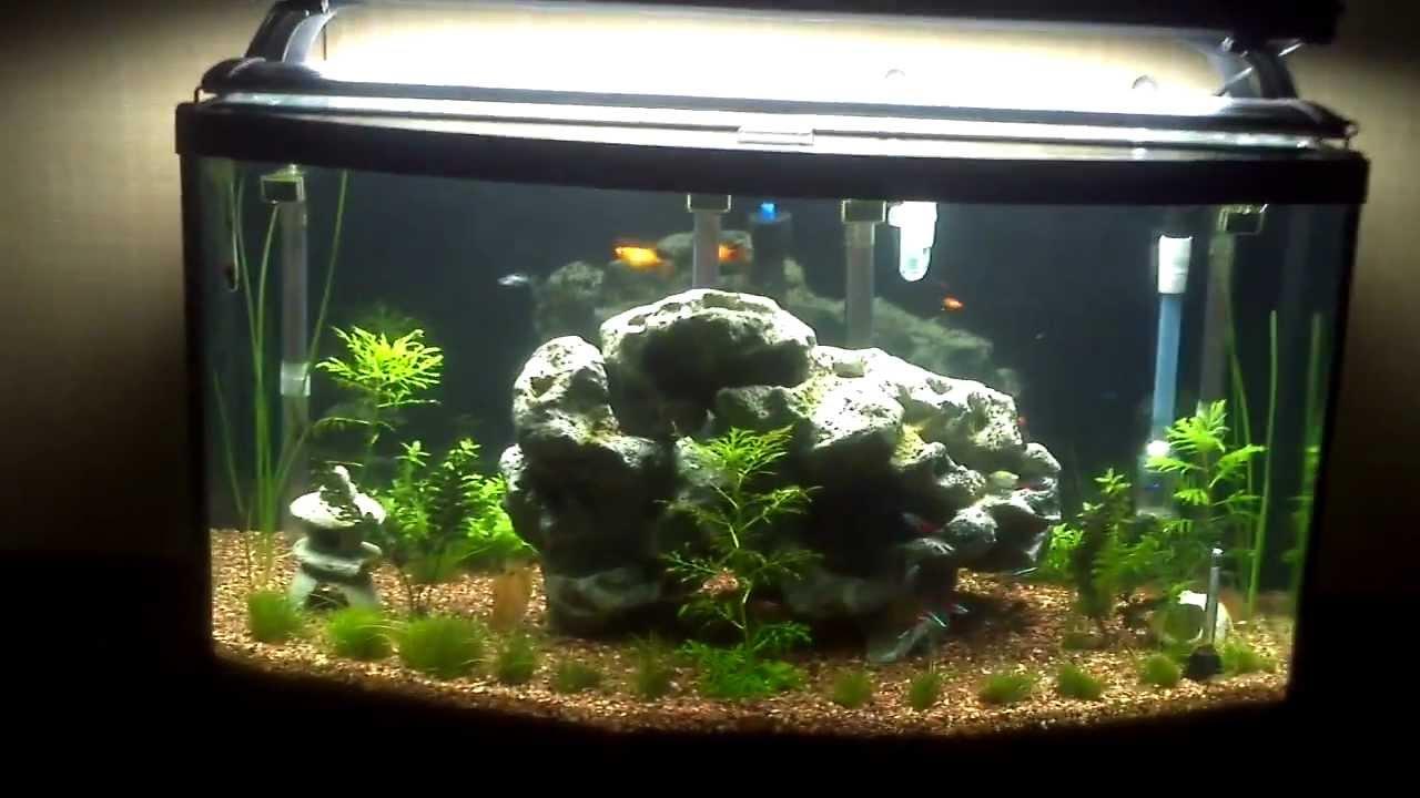 46 Gallon Bow Front Aquarium 2012 11 14 Mp4 Youtube