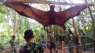 GIANT BAT CAPTURED, WHAT IS IT?