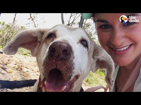 Dog Who Spent 7 Years In The Shelter Is SO Happy To Have A Family | The Dodo Faith = Restored