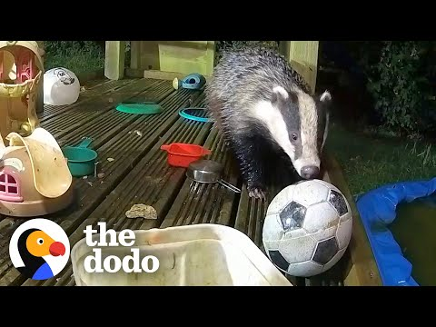 Guy Builds His Kids A Playground — And Wild Animals Move In   The Dodo Wild Hearts