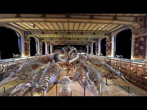 Galerie d'Anatomie