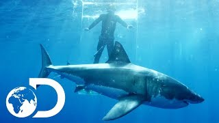 Gigantic Sharks Break Into Ghost Cage | Island of The Mega Shark