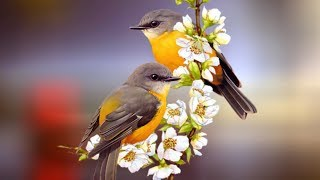 "Peaceful Relaxing Instrumental music, Meditation Quiet Music "" Birds of August"" By Tim Janis"
