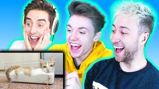 THE PALS TRY NOT TO LAUGH! (The Pals React to Funny Videos)