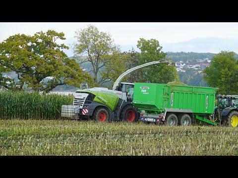 CLAAS JAGUAR 950 | Grovfôrteam AS | Maishøsting 2020