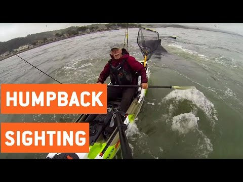 Fisherman Has Close Encounter With Humpback Whales