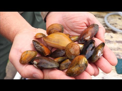 AMAZING Mussel Recovery | Virginia Department of Wildlife Resources, AWCC