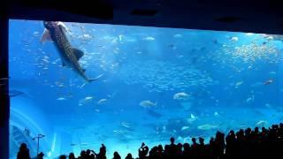 水族館17