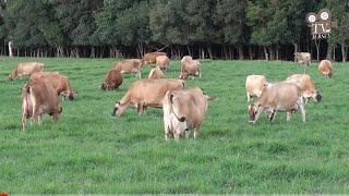 Agropecuária Arapari Jersey  - Fazendas de Sucesso - TV Jersey