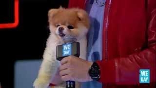 Boo the Dog at WE Day California
