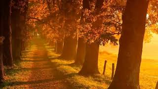 Sad Piano Brings Tears To My Eyes/Soothing Violin Relaxing Music/Beautiful Relaxing Music*4