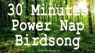 30 Mins Relaxing Birdsong Nature Sounds of Birds Chirping Forest Bird Sounds Study  Relax Meditate