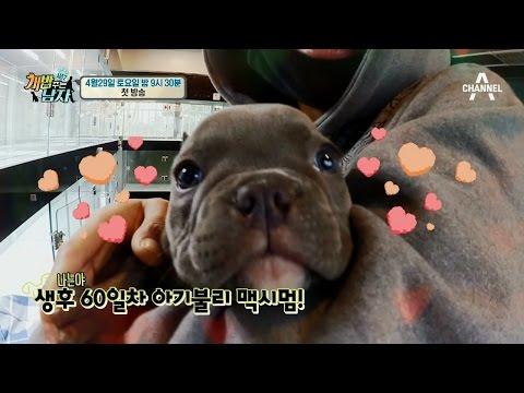 [선공개] 생후 60일차 아기불리의 맥시멈급 미모!_웹오리지널ver