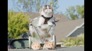 If Cats Ruled the World