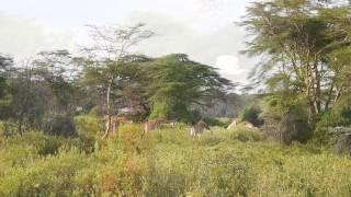 #24 - Kenya (2)