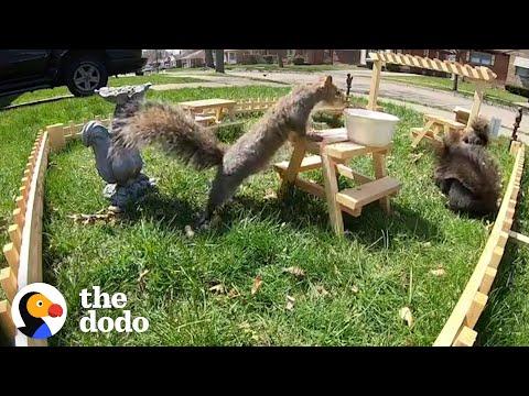 Guy Builds Tiny Restaurant for Neighborhood Wildlife...See What Happens Next   The Dodo