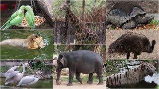 NEHRU ZOO HYDERABAD - HD Video - FULL Coverage    nehru zoological park