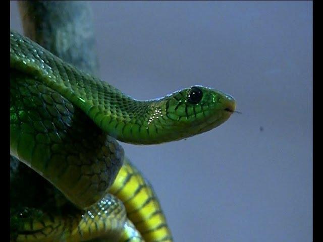 Anacondas slithery path to Thiruvananthapuram zoo gets lengthier