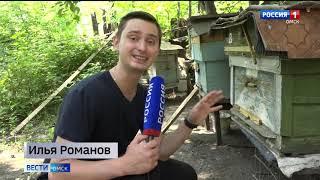 Омский пчеловод может попасть в Книгу рекордов Гиннеса