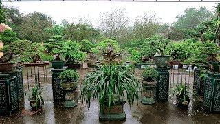 Một sân cây bonsai rất đẹp của anh Sơn - Hưng Yên