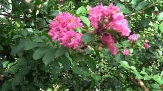 Con Đường Hoa Tường Vi | Trang Trại Hoa Cây Cảnh Thăng Long
