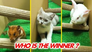 Cat Kitten 🐈 Hamster 🐹 vs Rabbit🐇 Who is the BEST? Battle in the GAINT Maze with Life of Pets Hamham
