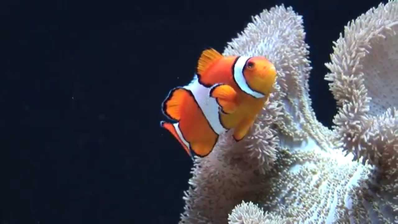 Finding Nemo in real life! - YouTube