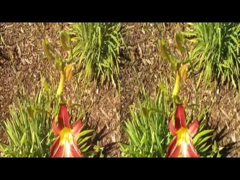 Blossoms in Burlingame 3D (YT3D:Enabled=True)