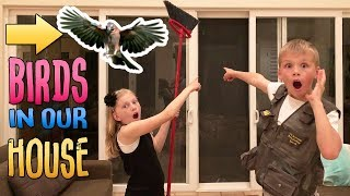 Wild Birds in our House & Another Flash Flood    Mommy Monday