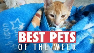 Best Pets of the Week Video Compilation| January 2018 Week 4