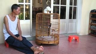 Chich choe lua cua Gianghoaianh ngay 11 12 2011