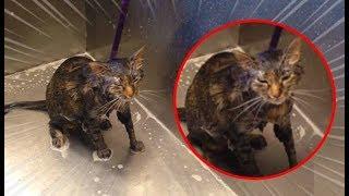 Esta mulher estava dando banho em seu gato, mas de repente algo inexplicável aconteceu