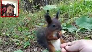 PewDiePie Reacting to Squirrel Frozen in Time