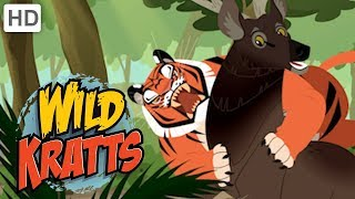 Wild Kratts 🐯 Rescuing Endangered Species 🐼| Kids Videos