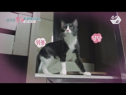 [JustBeJoyful JBJ] I am the only one who don't have a cat... Becoming a fan of Tolbi&Leusi Ep.1