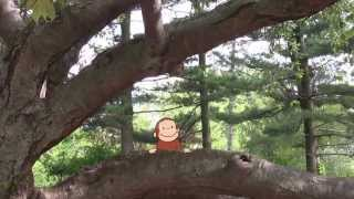 Curious George: Curious About Trees