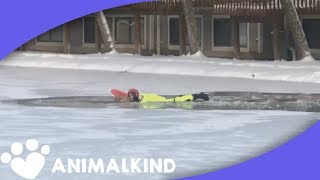Golden retriever falls into icy pond