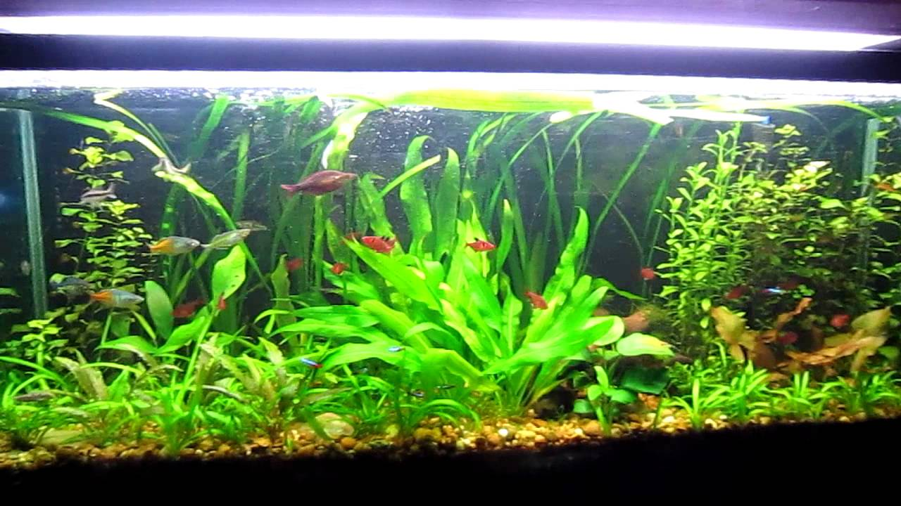 Tips And Tricks To Successful Aquascaping Freshwater