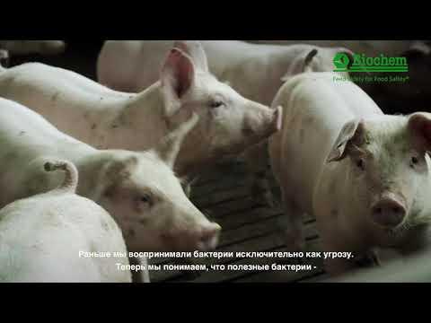 Landmandsfilm Biochem Russian subtitles