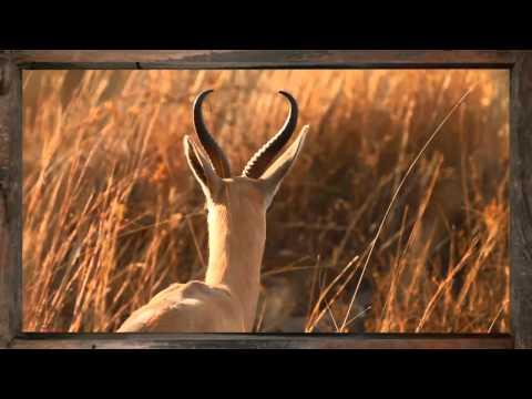 Springbok - African Sky
