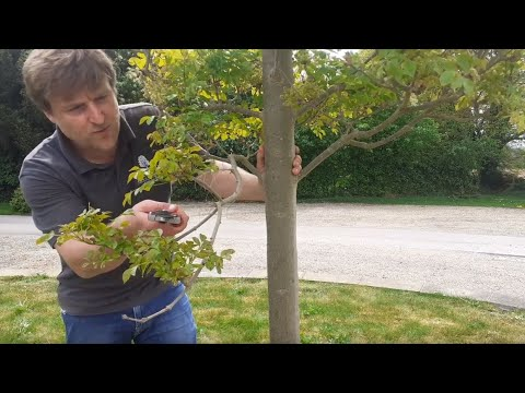 Young Tree Maintenance Tips